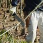 Machete japonés Silky Yoki (270 mm) con funda resistente de nailon reforzada, clip para cinturón y empuñadura de goma.