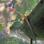 Pértiga de poda telescópica japonesa Silky Hayate 2.400-6.100 mm (420 mm - 6,5 dientes/30 mm) con funda protectora de polipropil